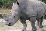 rhinothumbnail