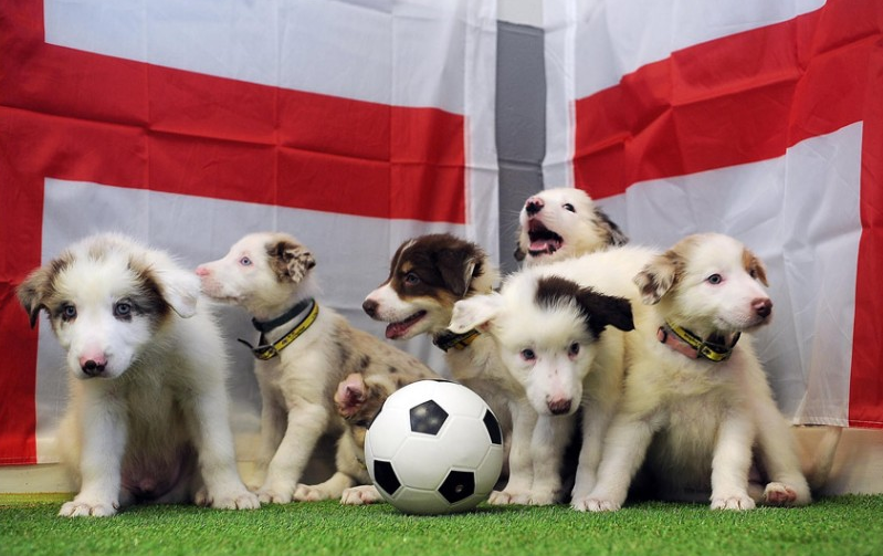 world cup pr stunts