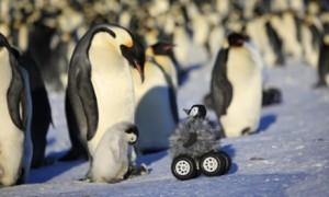 robot penguin