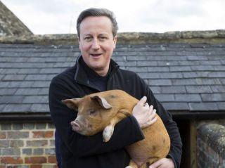 David-Cameron-and-pig