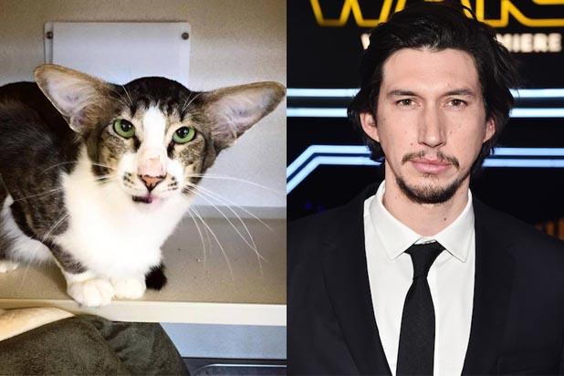 Adam-Driver-Cat