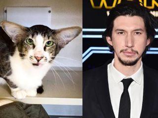 Adam.Driver.Cat